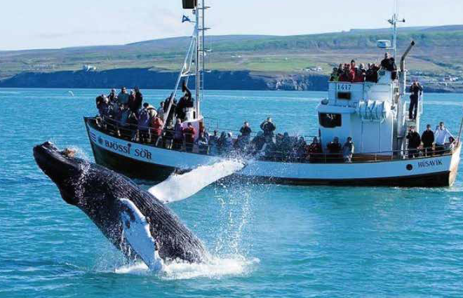 Whale Watching aranged by Boutique DMC Iceland